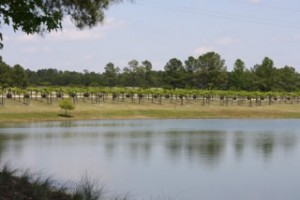 Duplin Winery pic 2